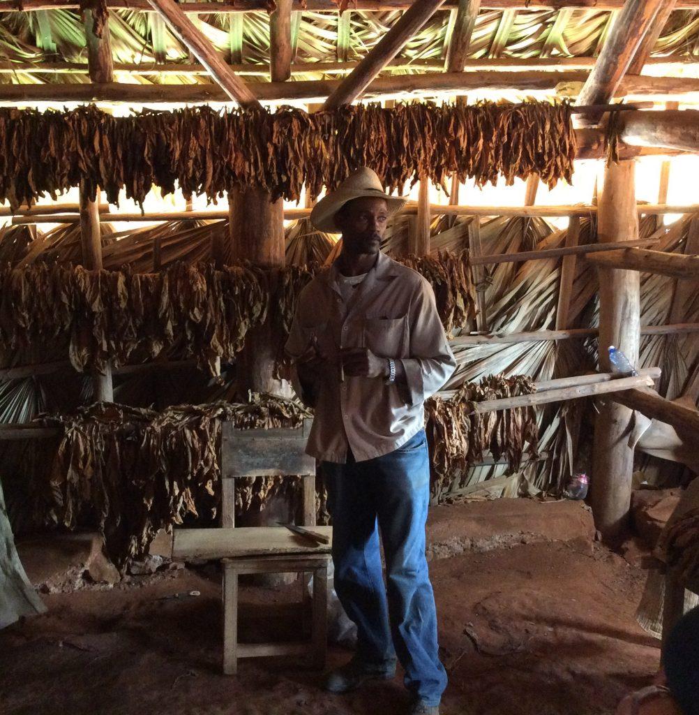 visita plantação de tabaco